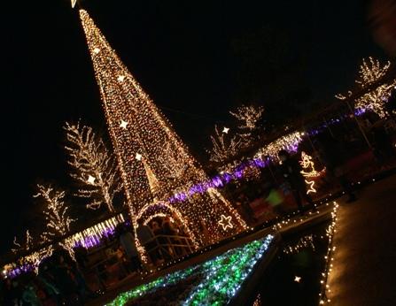 12月5日あしかがフラワーパーク1