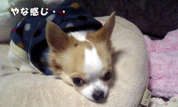 11marine0127_03.jpg