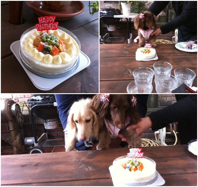 ここちゃん誕生日