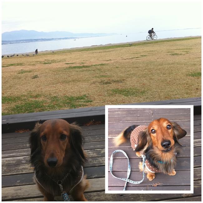 琵琶湖とマロン