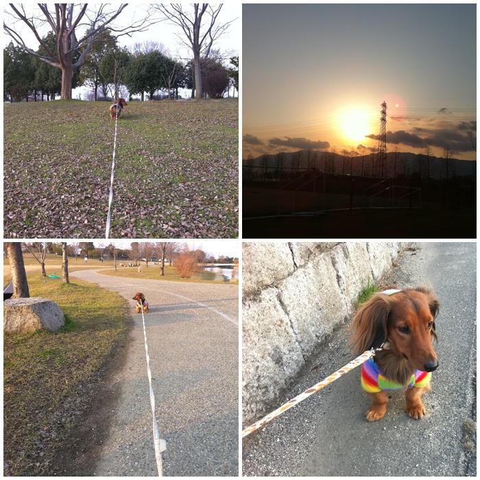運動公園散歩