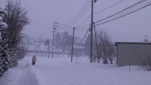 今朝は吹雪(25.1.4)