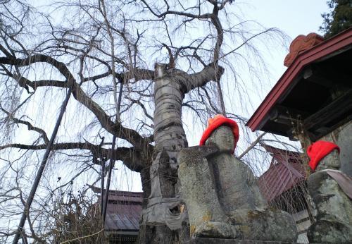 隆谷寺のしだれ桜とお地蔵さん(25.1.13)