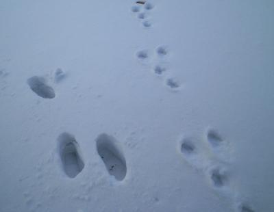 ウサギの足跡(25.1.21)