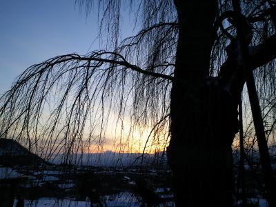 しだれ桜の向こうに落陽(25.2.9)