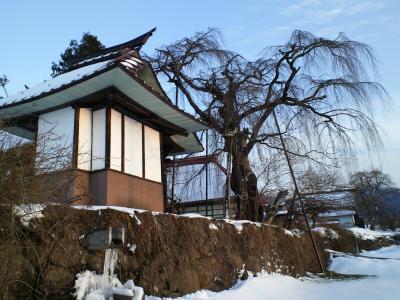 天神堂としだれ桜(25.2.9)