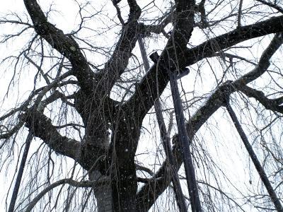 支柱で支えられた枝(25.2.8)