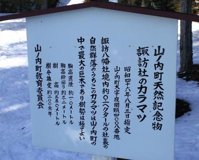 天然記念物カラマツ案内看板(25.3.11)