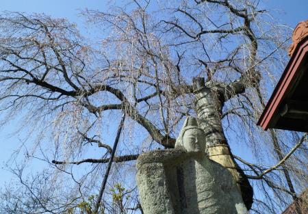 しだれ桜とお地蔵さん(25.4.9)