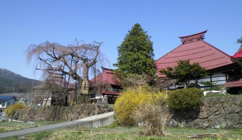 隆谷寺としだれ桜(25.4.9)