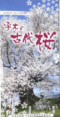 宇木の古代桜パンフレット(25.4.11)