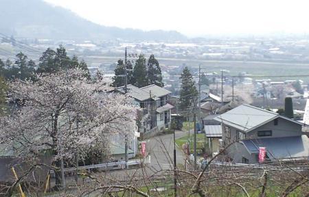 宇木の集落は桜でいっぱい(25.4.17)