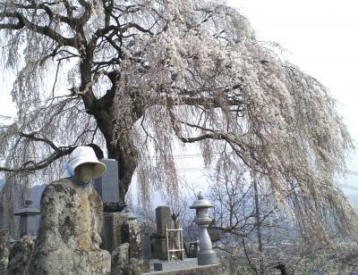 お地蔵さんと大久保のしだれ桜(25.4.17)