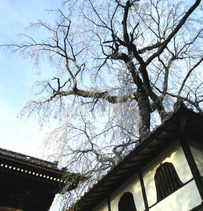 谷厳寺山門としだれ桜(25.4.23)
