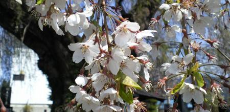 散り際の花たち(25.4.25)