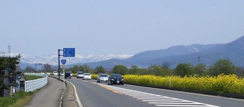 国道117号線菜の花街道(25.5.5)