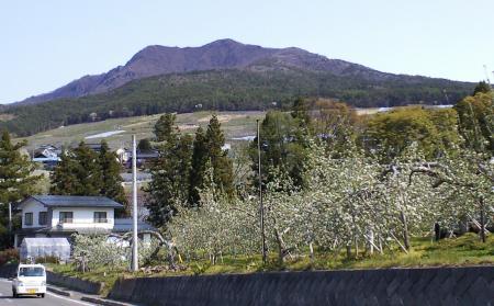 今日の高社山(25.5.8)