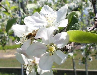 ハチのお仕事(25.5.9)