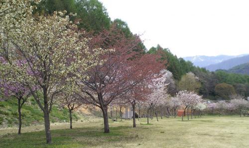 どんぐりの森公園の春(25.5.10)