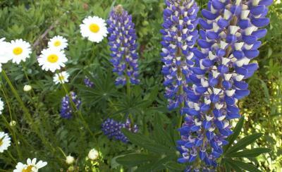 庭の花(25.5.24)