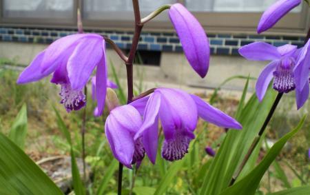 庭の花(25.5.28)