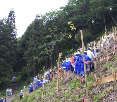 急傾斜の植樹地(25.6.8)