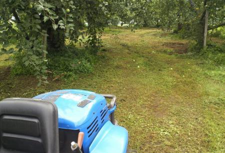 リンゴ畑の草刈り(25.7.18)