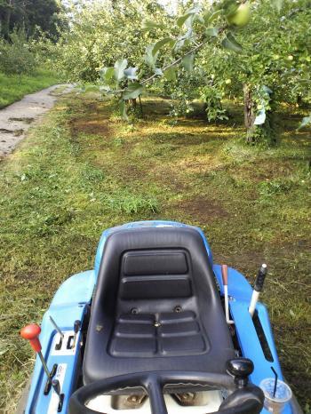 リンゴ畑の草刈り(25.8.1)