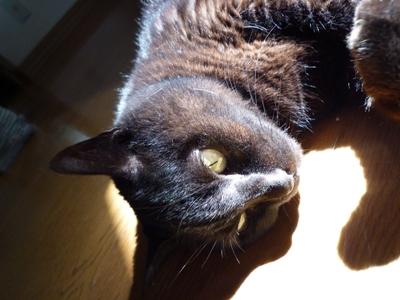猫友、ブロ友、D友、カツオの友?