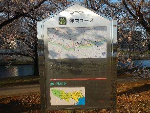 通勤路桜2013 (29)