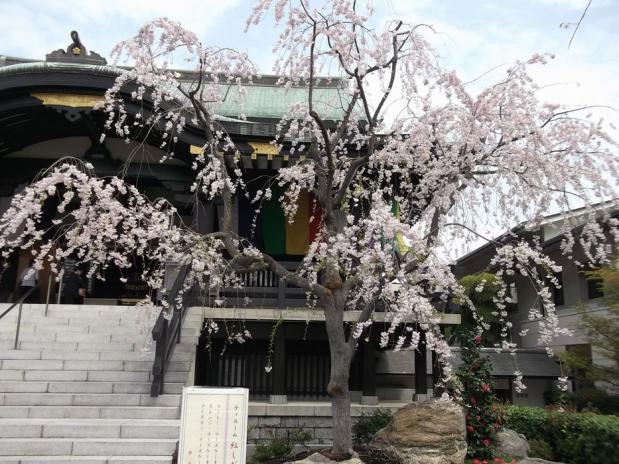 南蔵院 (4)