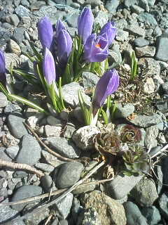 2009-04-03_12-50.jpg
