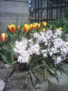 2009-04-20_12-14.jpg