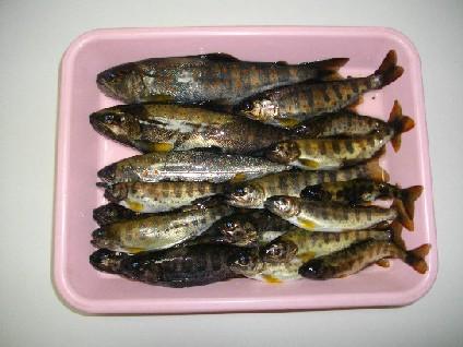 2013_0302上勝町初釣り0012
