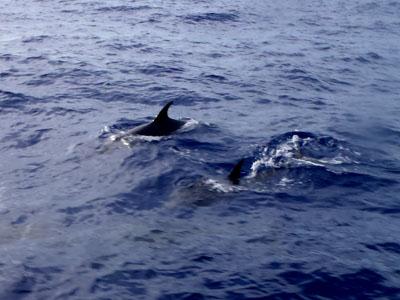 イルカ群れ