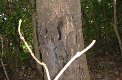 いい感じの樹