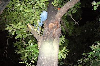 木に登るイケメンハンター