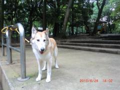 犬友達が居ない公園