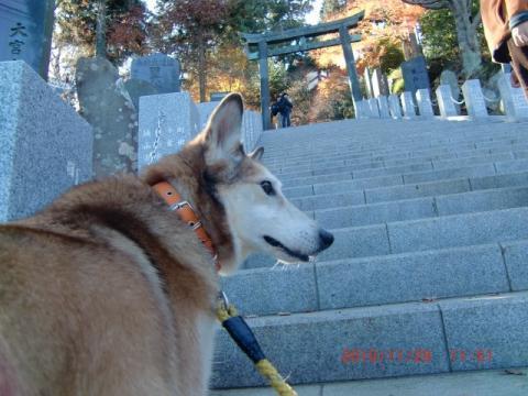 この辺りが一番急な階段