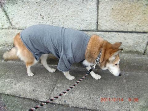 新しい防寒着