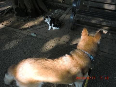 猫にアピール