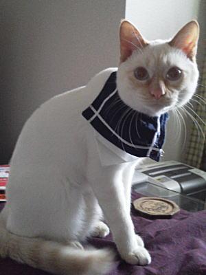 猫用バンダナ「怪盗またたび団」
