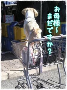 忠犬シーズーちゃん
