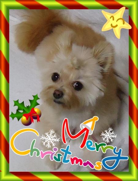 christmas_20121224151323.jpg