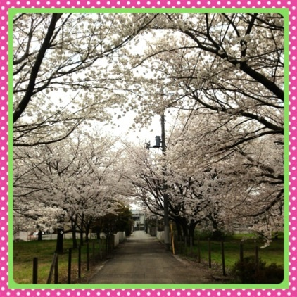 image_20130328135048.jpg
