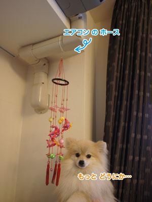 DSC05114.jpg