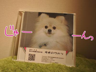 DSC05148.jpg