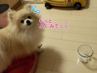 P3260852.jpg