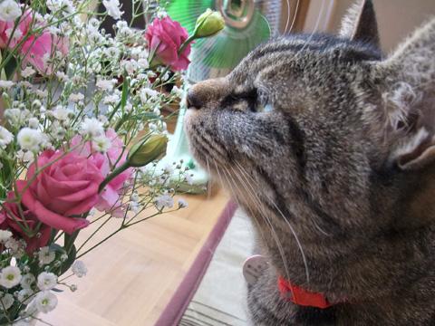 花を愛でる??