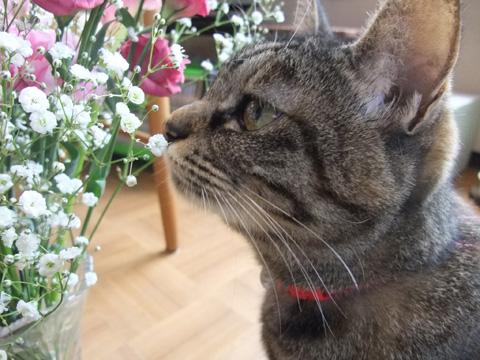 花を愛でる?②